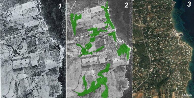 Γιατί δεν έπρεπε να αφήσουμε την Χαλέπιο Πεύκη στο Μάτι χωρίς οριοθέτηση και έλεγχο